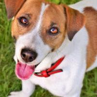 Barking Dogs | New Jersey Criminal Defense Lawyer